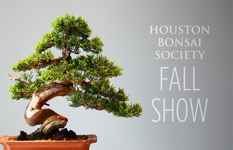 Join Us For The 2018 Houston Bonsai Society Fall Show This October 13th 14th In Dillard S Wing